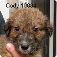 Adopt A Pet :: Cody - baltimore, MD
