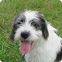 Adopt A Pet :: Annie - Erwin, TN