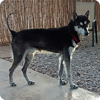 Adopt A Pet :: Tommy - Cedar Crest, NM