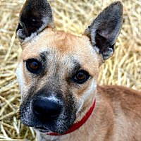 Adopt A Pet :: Maple - Lacon, IL