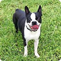 Adopt A Pet :: Duckie in Texarkana, TX - Texarkana, TX