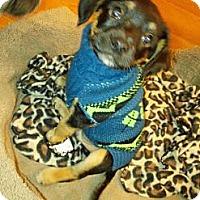 Adopt A Pet :: Carl - Encinitas, CA