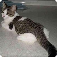 Adopt A Pet :: Trich - Davis, CA