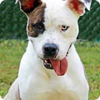 Adopt A Pet :: Skylar - Port Washington, NY