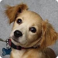 Adopt A Pet :: Logan - Minneapolis, MN