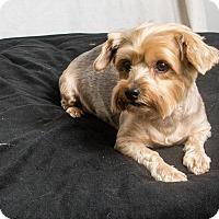 Adopt A Pet :: Megan - Seminole, FL