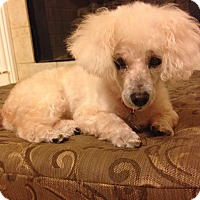 Adopt A Pet :: Gabby: on medical hold - Madison, WI
