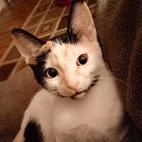 Adopt A Pet :: Annette - West Palm Beach, FL