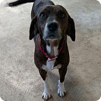 Adopt A Pet :: Ellie Mae - Colmar, PA