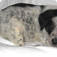 Adopt A Pet :: Wiley - Pilot Point, TX