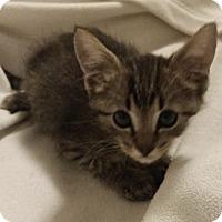 Adopt A Pet :: Owen - Garland, TX