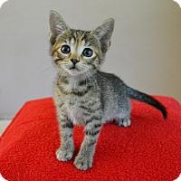Adopt A Pet :: Zara - Springfield, IL