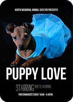 Chihuahua/Dachshund Mix Puppy for adoption in Lufkin, Texas - Babette