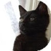 Adopt A Pet :: Dixon - Vancouver, BC