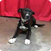 Adopt A Pet :: Trent - FOSTER NEEDED - Seattle, WA