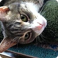 Adopt A Pet :: Marigold - Deerfield Beach, FL