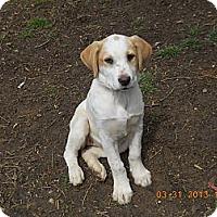 Adopt A Pet :: Serena - Charlotte, NC