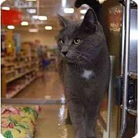 Adopt A Pet :: Misty - Modesto, CA