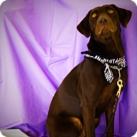 Adopt A Pet :: Kaylee - Princeton, KY