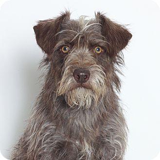 Terrier (Unknown Type, Medium) Mix Dog for adoption in Stockton, California - Naomi