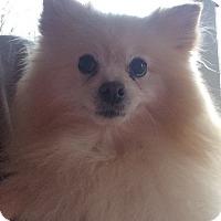 Adopt A Pet :: Happy and Prince - Kansas city, MO