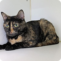 Adopt A Pet :: Sybil - Greensboro, NC