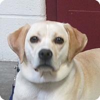 Adopt A Pet :: Sara Lee - LaGrange, KY