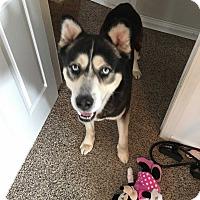 Adopt A Pet :: Kaine-Adoption Pending - Davenport, IA