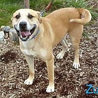 Adopt A Pet :: Zues - Yreka, CA