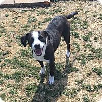 Adopt A Pet :: Oreo - Staten Island, NY