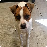Adopt A Pet :: Bucky - Nashville, TN