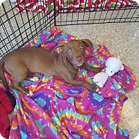 Adopt A Pet :: Cher - Brownsville, TX