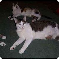 Adopt A Pet :: Possum - North Plainfield, NJ
