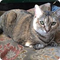 Adopt A Pet :: Cordelia - Chicago, IL