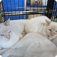 Adopt A Pet :: Flame Boys - Easley, SC