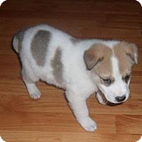 Adopt A Pet :: ZORO - Torrance, CA