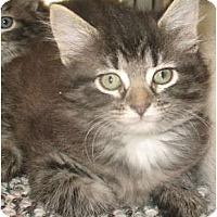 Adopt A Pet :: Chardonnay - Acme, PA