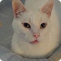 Adopt A Pet :: Phillip - Orillia, ON