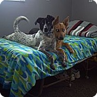 Adopt A Pet :: Pepper - Morgantown, WV