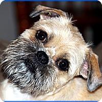 Adopt A Pet :: TANNER - ADOPTION PENDING - Little Rock, AR