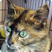 Adopt A Pet :: Tess - Calgary, AB