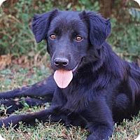 Adopt A Pet :: *Izzy - PENDING - Westport, CT