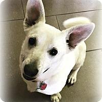 Adopt A Pet :: Roscoe - Tijeras, NM