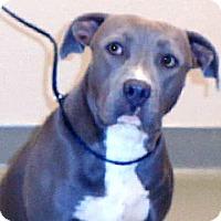 Adopt A Pet :: Logan - Wildomar, CA