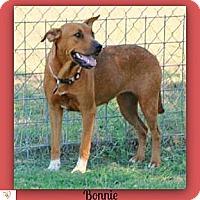 Adopt A Pet :: Bonnie - Eddy, TX