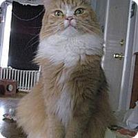 Adopt A Pet :: Michiku - bloomfield, NJ