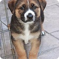 Adopt A Pet :: Bernie - La Habra Heights, CA