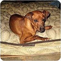 Adopt A Pet :: General Red - Phoenix, AZ