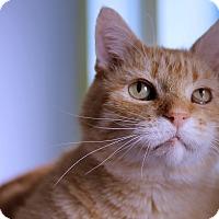 Adopt A Pet :: Renton - Chicago, IL