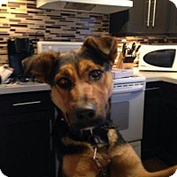 Adopt A Pet :: Maeve - Saskatoon, SK